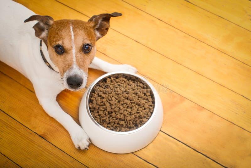 Hungry dog bowl royalty free stock photos