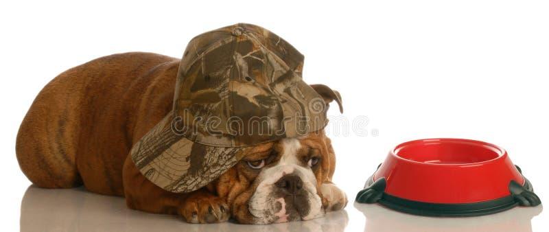Hungry dog at food dish stock photos
