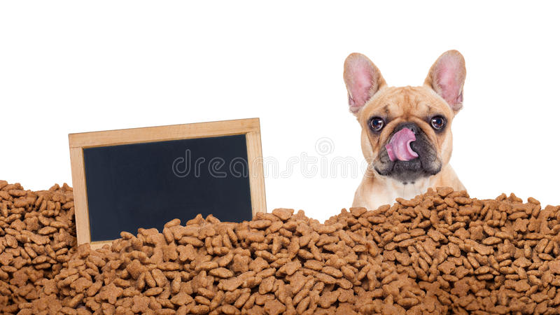 Hungry dog in a food rain stock image