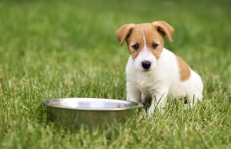 Hungry dog puppy waiting for his food stock image