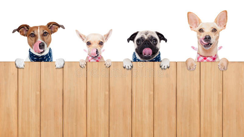 Hungry dogs stock photos