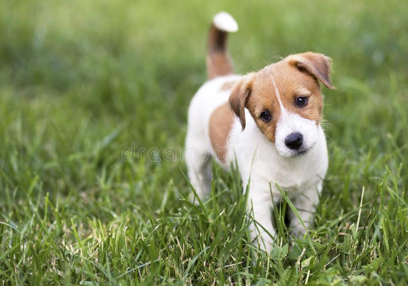 Hungry happy puppy dog waiting his food royalty free stock photo