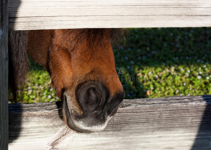 Download Hungry horse stock photo. Image of nose, nostril, corral - 12321076