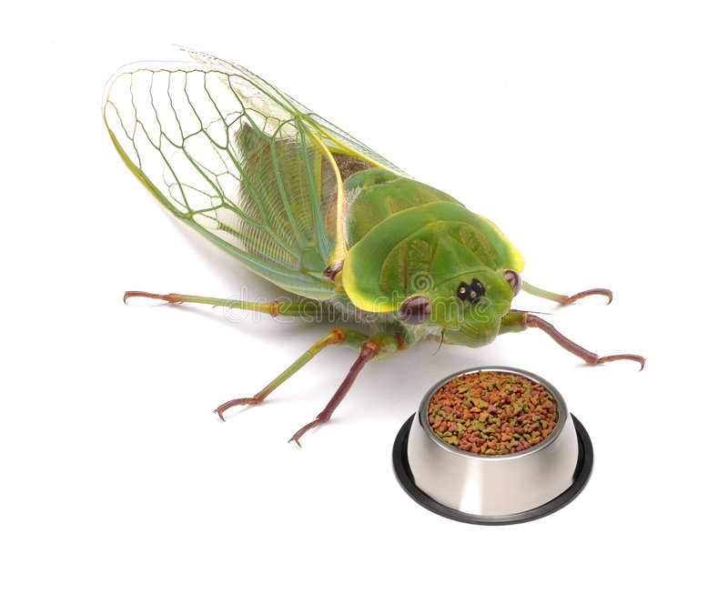 Hungry Pet Insect Bug Funny royalty free stock photo