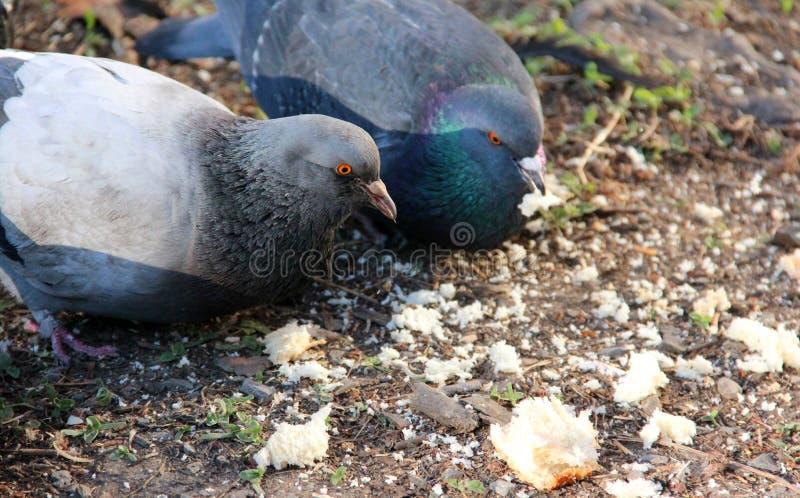 135 Small Bird Bread Crumbs Photos - Free & Royalty-Free ...