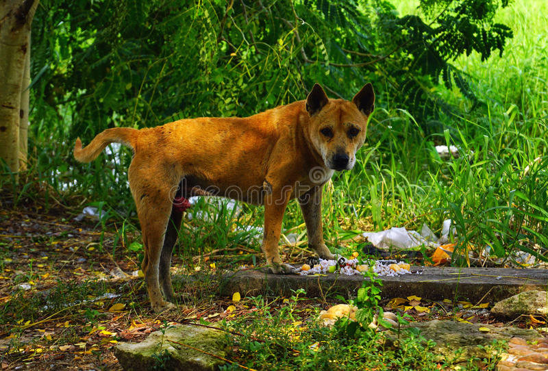 Hungry stray dog is eating royalty free stock images