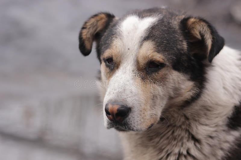 Hungry stray dog is sad waiting for his master stock photography