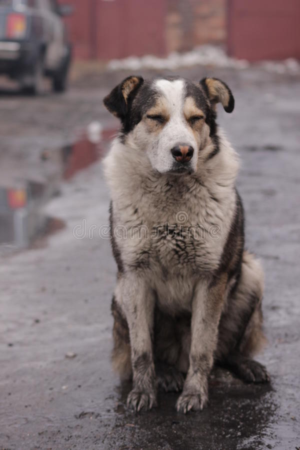 Hungry stray dog is sad waiting for his master royalty free stock image
