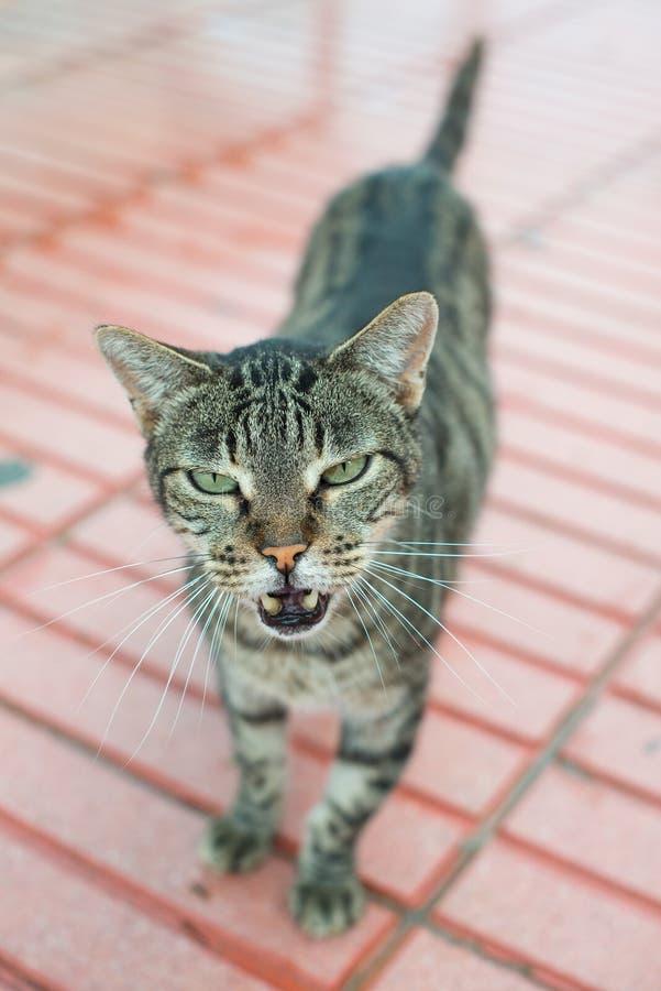 Hungry street cat. stock photo