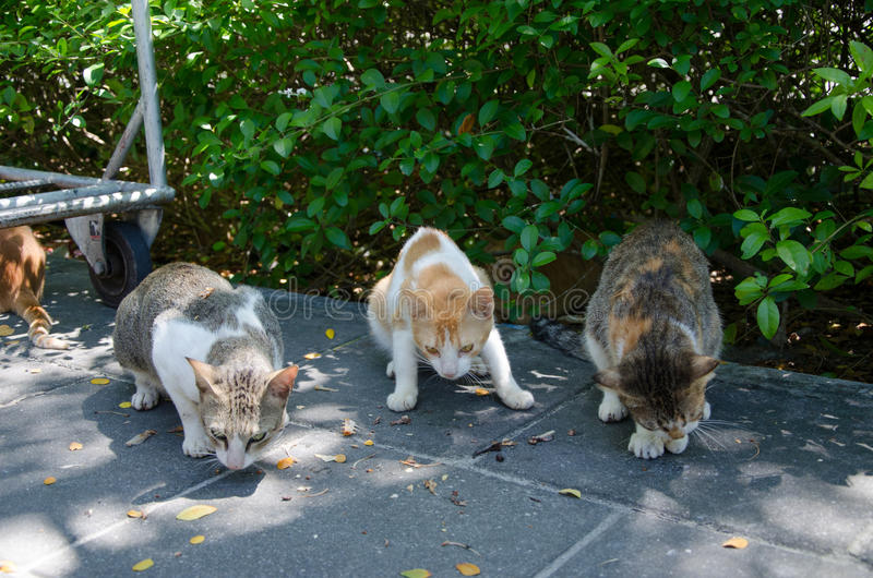 Hungry street cats eating stock images