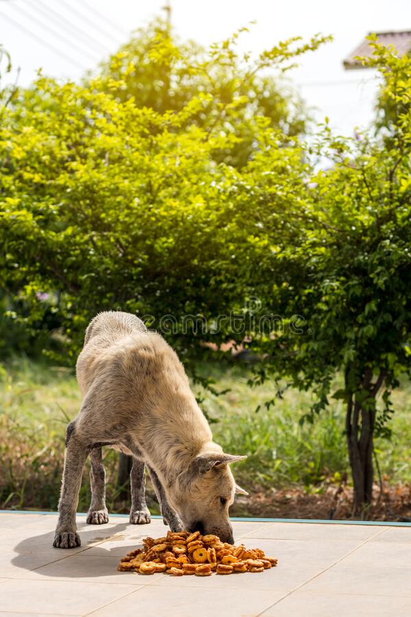 A stray dog stands to eat junk food royalty free stock photos