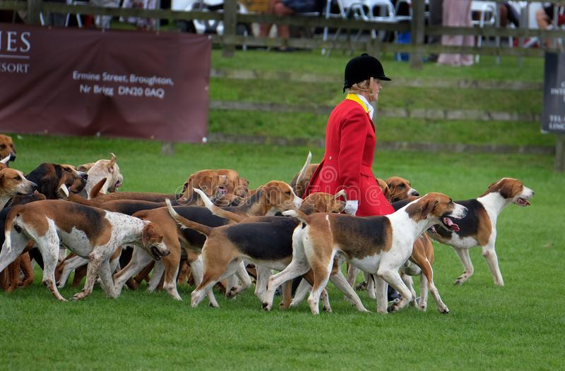 The Hunt, riders and fox hounds at agricultural show. The 134 th. Lincolnshire Agricultural Show, Show ground, Lincoln, Lincolnshire, UK. June, 20 2018. The stock photos