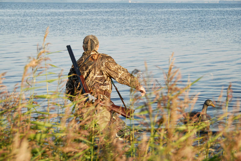 Hunter. Duck hunter spreading his decoys royalty free stock photography