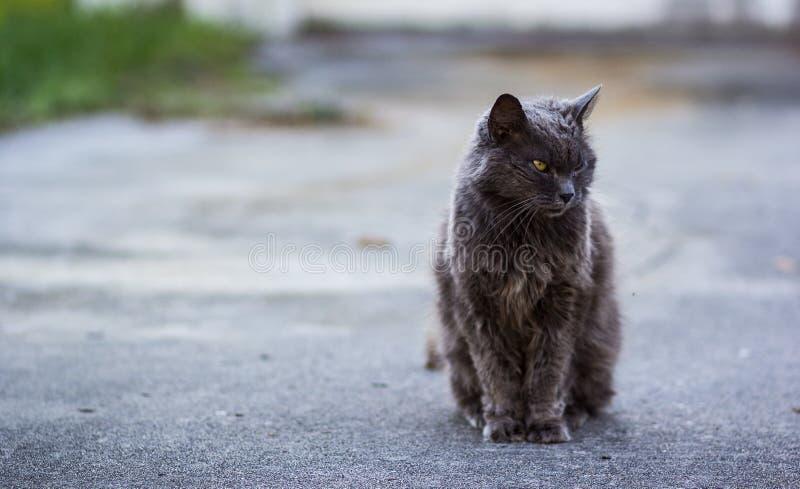 Hunter Cat royalty-vrije stock foto's