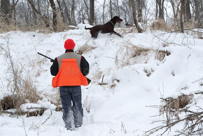 Hunter and Chocolate Labrador Retriever. A hunter walks a field with a Chocolate Labrador Retriever during a pheasant hunt stock photo