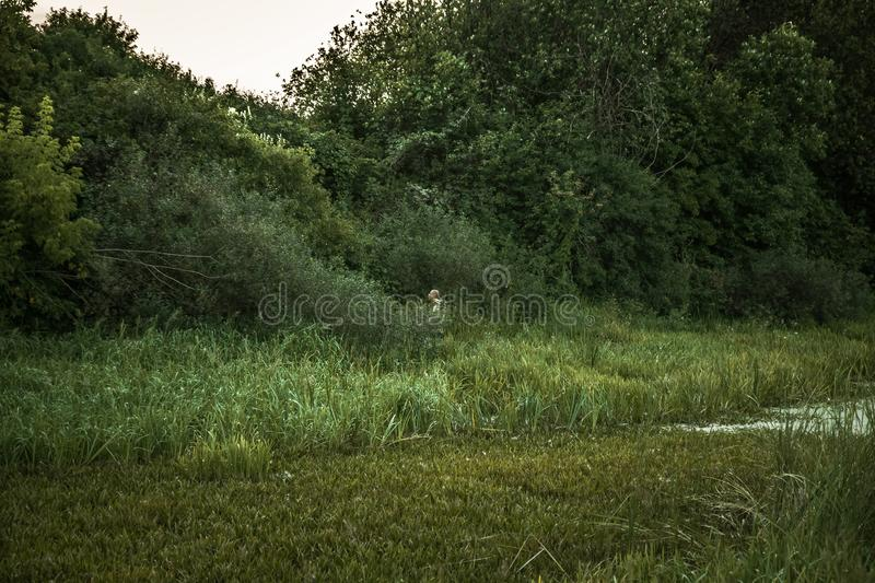 Hunter man standing in bushes nearby marshland in expectation of hunting during dusk stock images