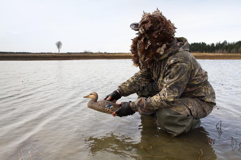 Hunter places a duck decoy in shallow water. Waterfowler places a duck decoy in shallow water before the hunt stock images