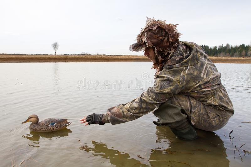 Hunter places a plastic duck decoy in shallow water. Waterfowler places a plastic duck decoy in shallow water before the hunt stock images