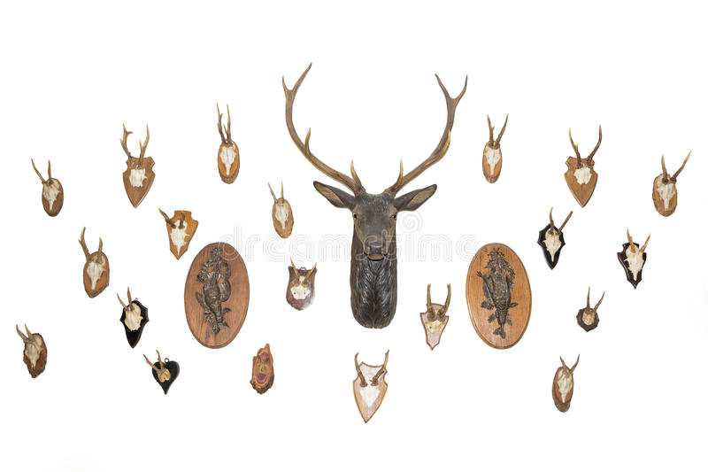 Hunter's house. Wall of trophies. stock image