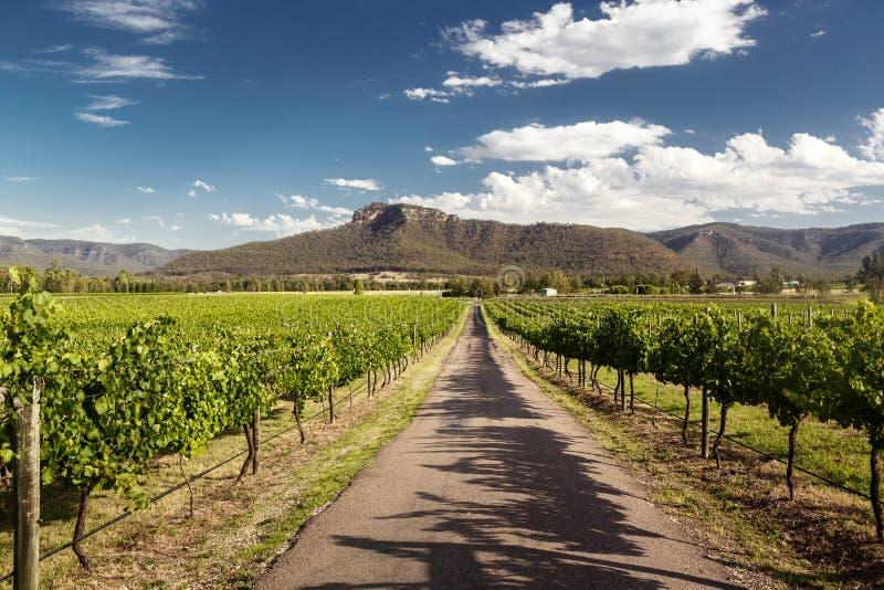 Hunter Valley-wijngaarden royalty-vrije stock foto's