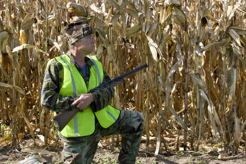 Hunter wearing a safety vest. Hunter in a safety vest with a shotgun with a corn field in the background stock photography