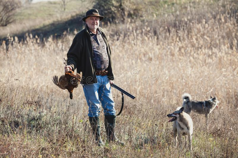 Hunter with a wild bird and dogs stock photo
