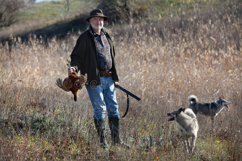 Hunter with a wildfowl and dogs. Hunter with a gun, wildfowl and dogs after successful shot stock images