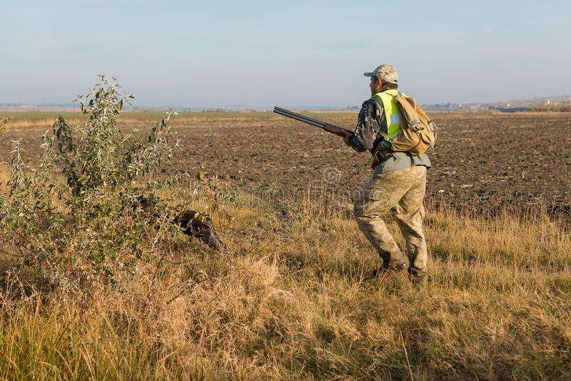 Hunters with a gun and german drathaar. Pigeon hunting with dogs.s stock image
