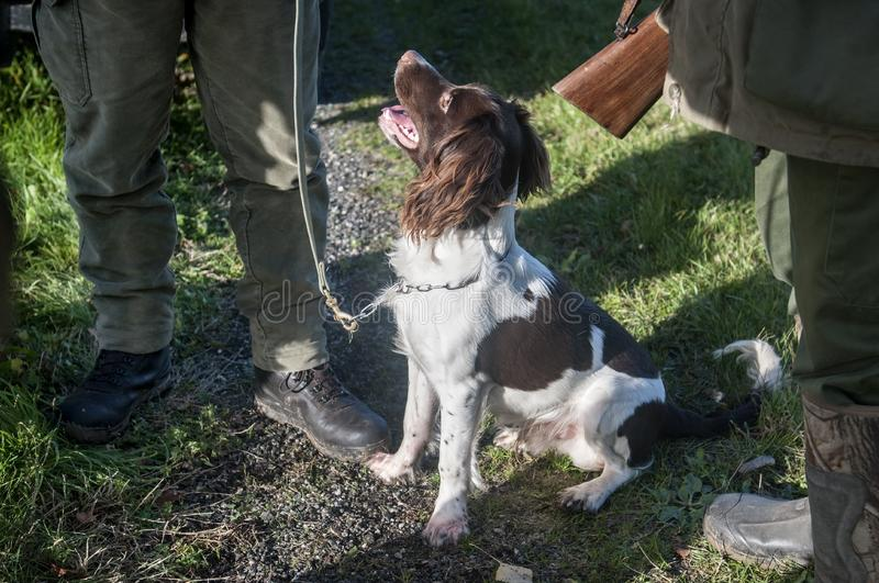 Hunters with hunting dog talk and relax royalty free stock photography