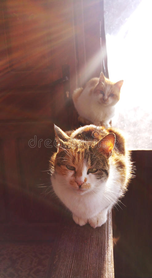 Hunters in the sun royalty free stock photography