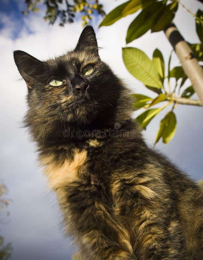 Download Hunting Cat stock image. Image of hair, hide, animal - 15245871