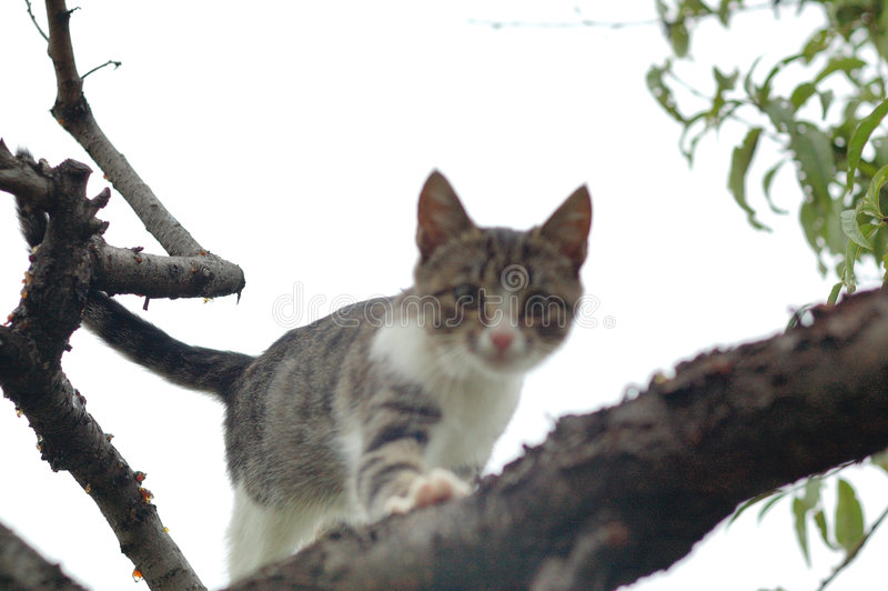 Hunting Cat on a tree royalty free stock photo