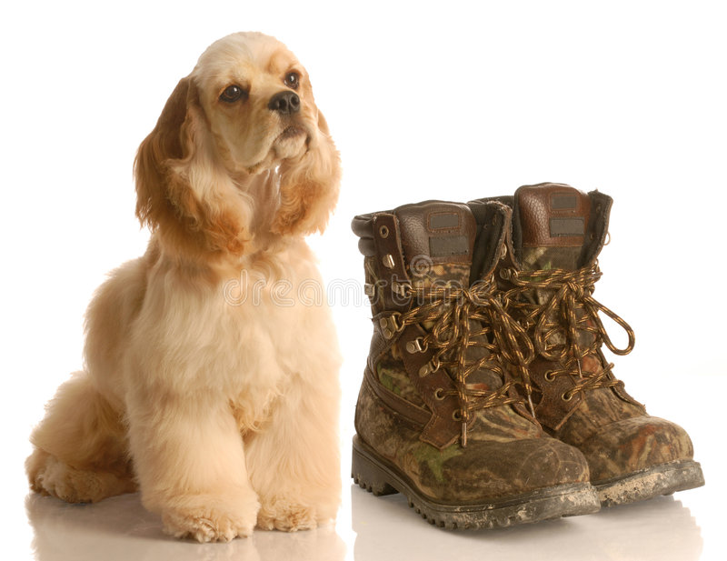 Download Hunting Dog Stock Photo - Image: 8754740