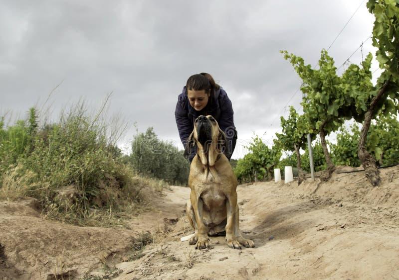 Hunting dog park royalty free stock photo