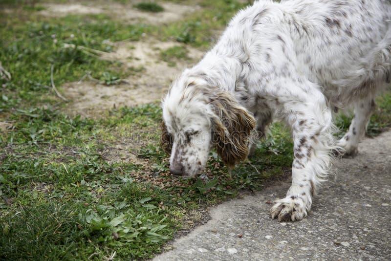 Hunting dog park royalty free stock photos