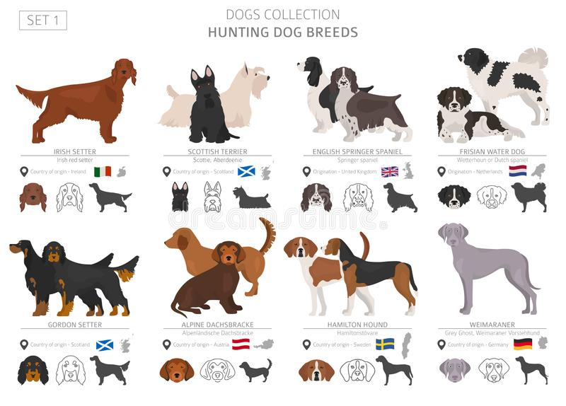 Hunting dogs collection isolated on white. Flat style. Different color and country of origin royalty free illustration