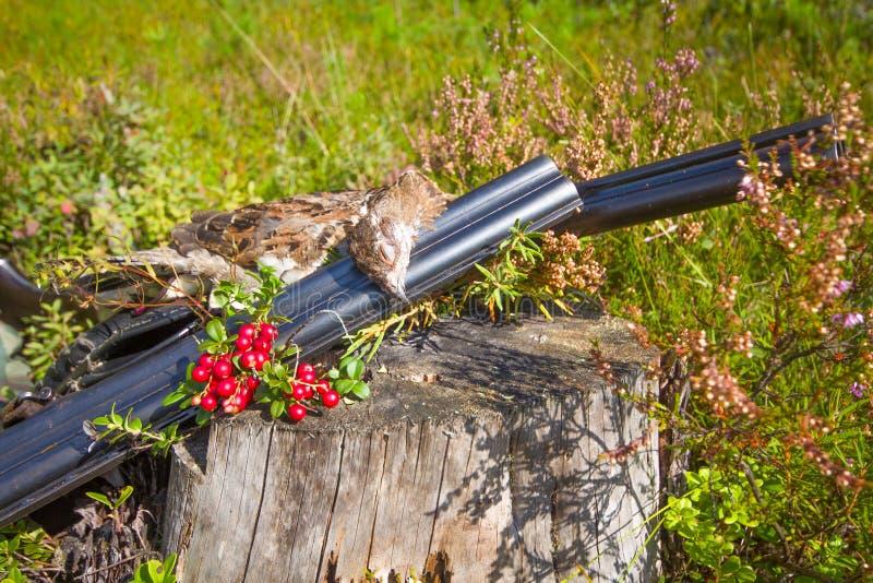 Hunting hazel grouse bird stock images