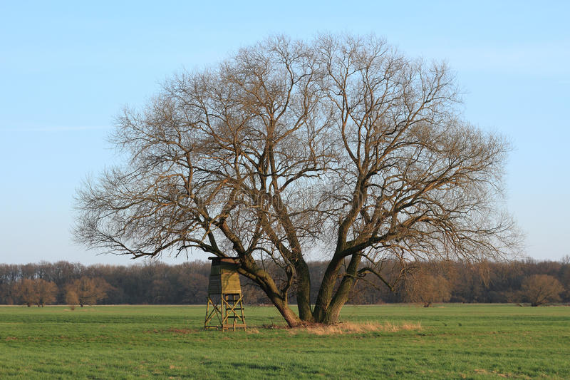 Download Hunting Pulpit Stock Photography - Image: 24125342