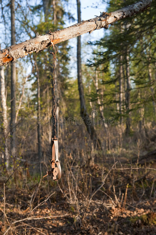 Hunting trap in forest. Scenic view of metal hunting trap hanging from tree branch in forest stock photos