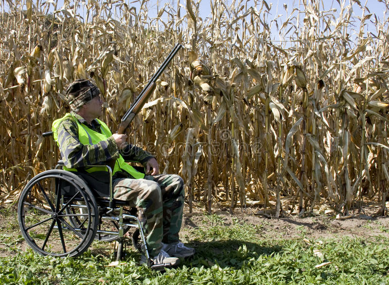 Hunting from a wheelchair. Handicapped hunter in a wheelchair wearing a safety vest with a corn field in the background stock photos