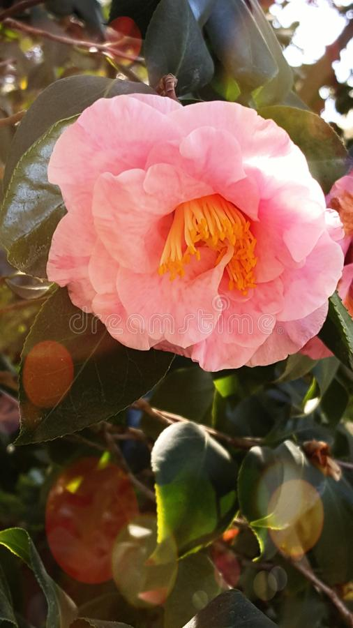 Huntington Beach Botanical Garden royalty free stock photos