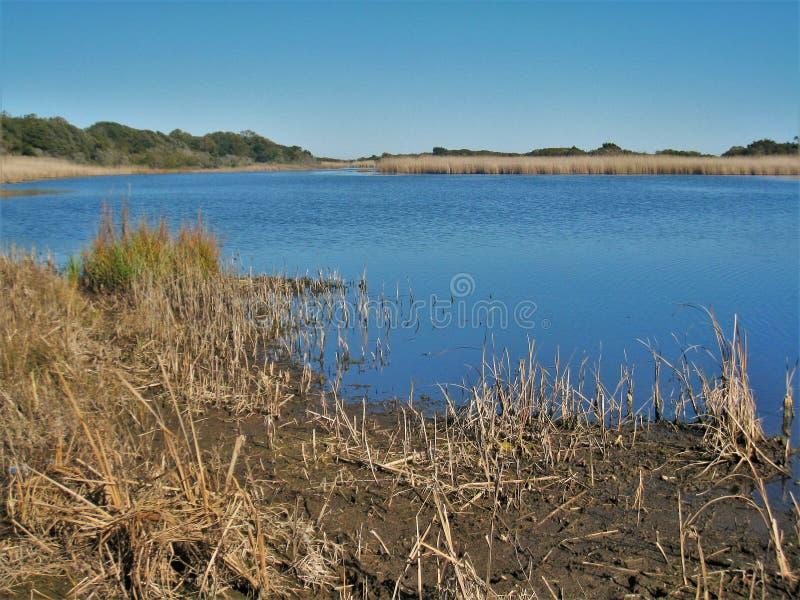 Huntington Beach-Sumpf stockbilder