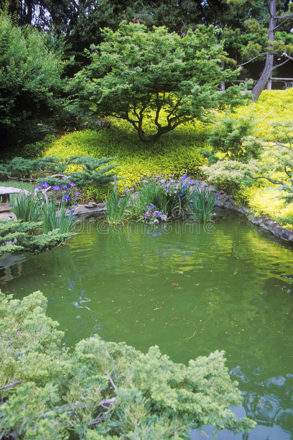 Huntington biblioteka i ogródy, Japońscy ogródy, Pasadena, CA zdjęcie royalty free