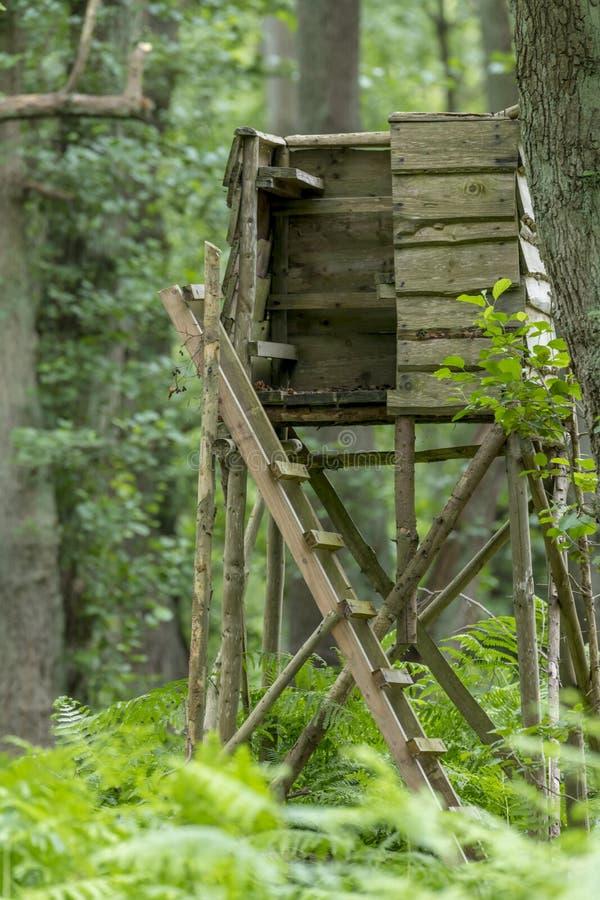Huntsman wysoki siedzenie przy krawędzią las przed łąką z zielonym tłem obraz royalty free