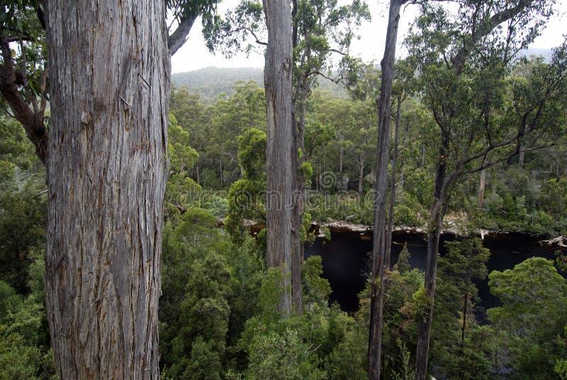 Huon River beskådade från Tahune skogairwalk, Tasmanien, Australien arkivfoton