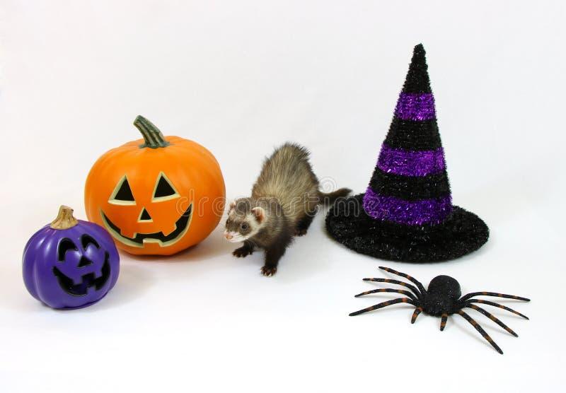 Hurón de Halloween en un fondo blanco imagen de archivo libre de regalías