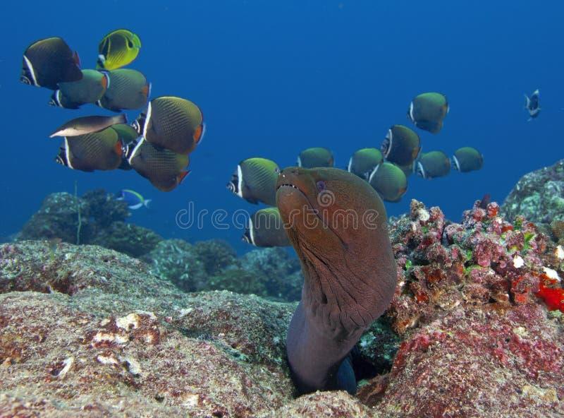 Hur fisken i det härliga undervattens- för Maldiverna blick royaltyfri fotografi