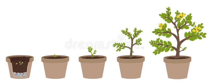 Hur man växer växter royaltyfri illustrationer