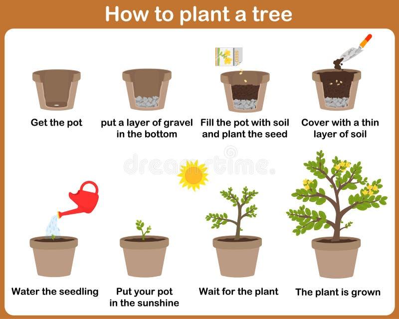 Hur man växer växter stock illustrationer