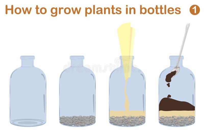 Hur man växer växter i flaskor vektor illustrationer